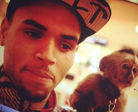 Chris Brown with a monkey