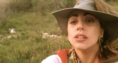 Lady Gaga on safari from Twitter