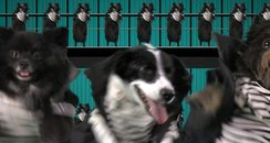 One Direction's 'Kiss You' music video spoof