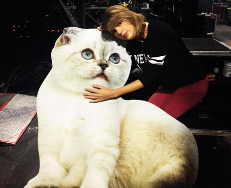 Taylor Swift Carboard Cat