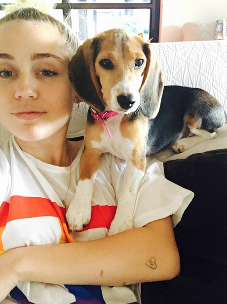 Miley Cyrus gets another new dog